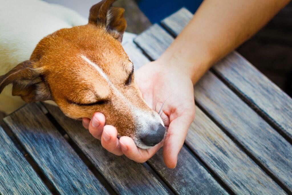 hund legt kopf in hand