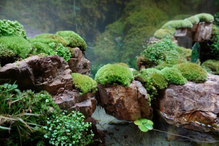 paludarium pflanzen