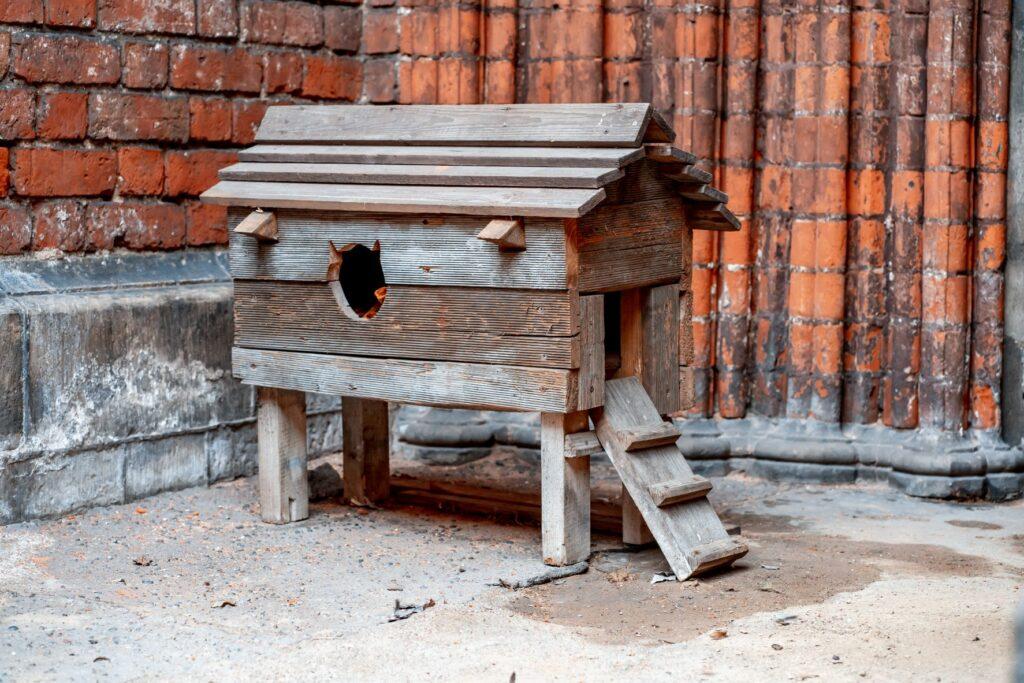 Katzenhütte selber bauen
